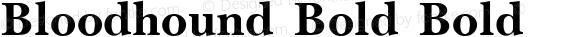 Bloodhound Bold Bold Unknown